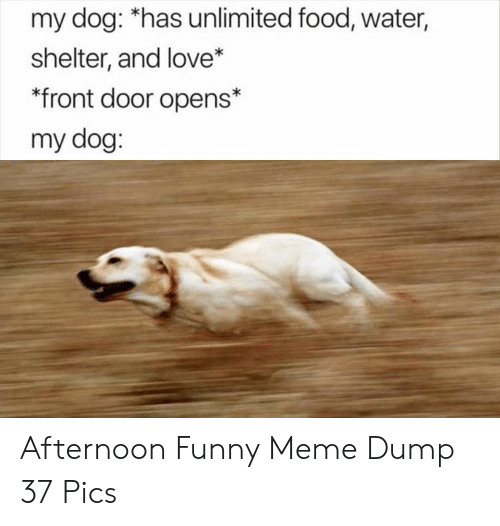 Front Door: my dog: *has unlimited food, water,  shelter, and love*  front door opens*  my dog: Afternoon Funny Meme Dump 37 Pics