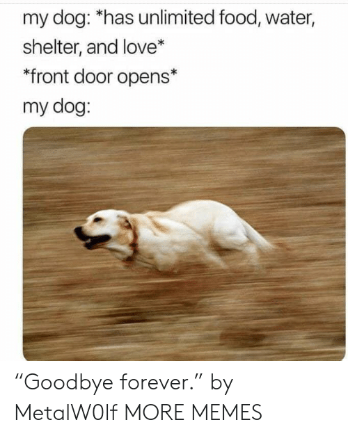 "Front Door: my dog: *has unlimited food, water,  shelter, and love*  *front door opens*  my dog: ""Goodbye forever."" by MetalW0lf MORE MEMES"