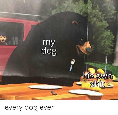Shit, Dog, and Own: my  dog  his own  shit every dog ever
