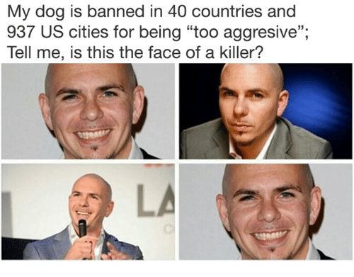 """Memes, 🤖, and Dog: My dog is banned in 40 countries and  937 US cities for being """"too aggresive"""";  Tell me, is this the face of a killer?  35."""
