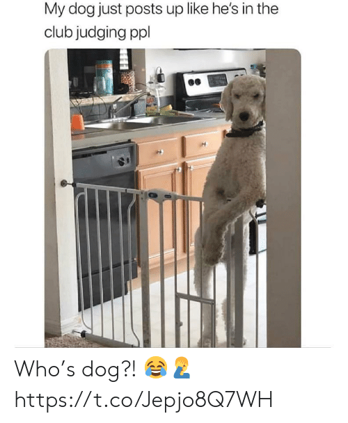 The Club: My dog just posts up like he's in the  club judging ppl Who's dog?! 😂🤦♂️ https://t.co/Jepjo8Q7WH