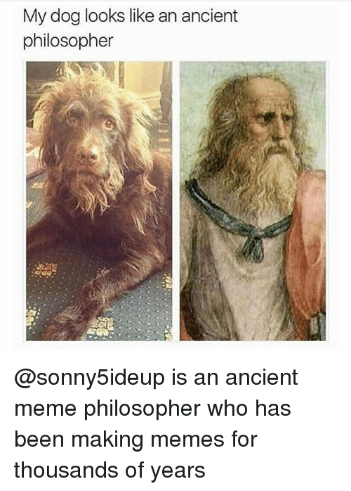 Ancient Memes: My dog looks like an ancient  philosopher @sonny5ideup is an ancient meme philosopher who has been making memes for thousands of years