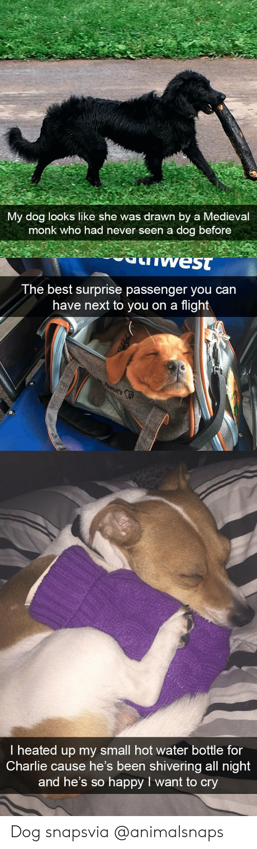 Charlie, Target, and Tumblr: My dog looks like she was drawn by a Medieval  monk who had never seen a dog before   west  The best surprise passenger you can  have next to you on a flight   I heated up my small hot water bottle for  Charlie cause he's been shivering all night  and he's so happy I want to cry Dog snapsvia @animalsnaps