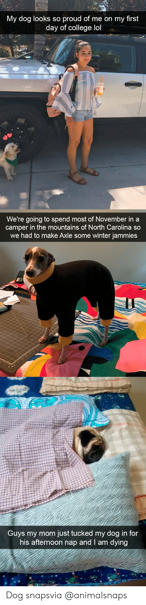 Tucked: My dog looks so proud of me on my first  day of college lol   We're going to spend most of November in a  camper in the mountains of North Carolina so  we had to make Axle some winter jammies   Guvs my mom just tucked my dog in for  his afternoon nap and I am dying Dog snapsvia @animalsnaps