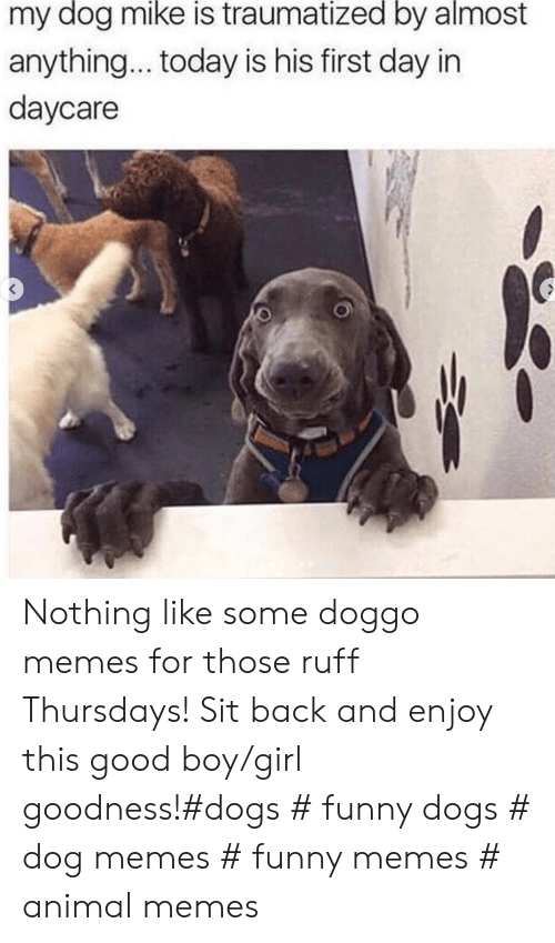 Dogs, Funny, and Memes: my dog mike is traumatized by almost  anything... today is his first day in  daycare Nothing like some doggo memes for those ruff Thursdays! Sit back and enjoy this good boy/girl goodness!#dogs # funny dogs # dog memes # funny memes # animal memes