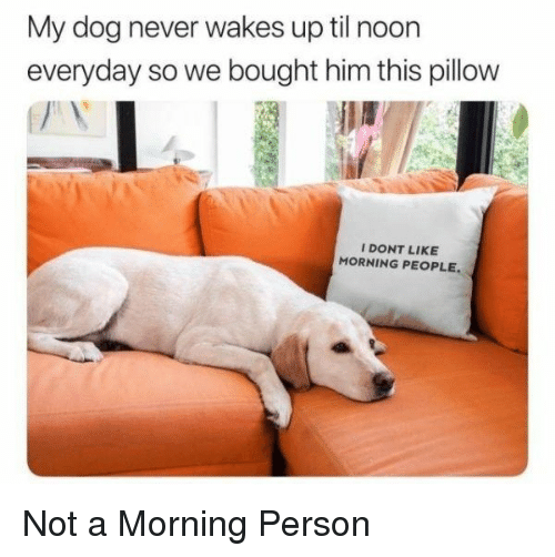 Never, Dog, and Til: My dog never wakes up til noon  everyday so we bought him this pillow  I DONT LIKE  MORNING PEOPLE Not a Morning Person