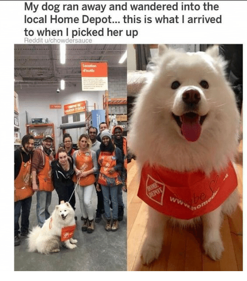 Depot: My dog ran away and wandered into the  local Home Depot... this is what I arrived  to when I picked her up  Reddit u/chowdersauce