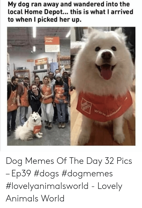 Depot: My dog ran away and wandered into the  local Home Depot... this is what I arrived  to when I picked her up. Dog Memes Of The Day 32 Pics – Ep39 #dogs #dogmemes #lovelyanimalsworld - Lovely Animals World