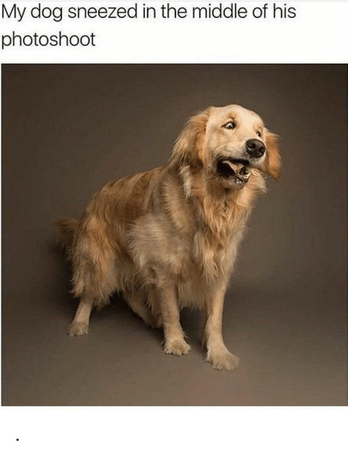 The Middle, Dog, and  in the Middle Of: My dog sneezed in the middle of his  photoshoot .