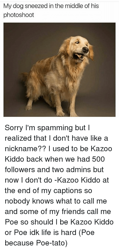 Nobody Know: My dog sneezed in the middle of his  photoshoot Sorry I'm spamming but I realized that I don't have like a nickname?? I used to be Kazoo Kiddo back when we had 500 followers and two admins but now I don't do -Kazoo Kiddo at the end of my captions so nobody knows what to call me and some of my friends call me Poe so should I be Kazoo Kiddo or Poe idk life is hard (Poe because Poe-tato)