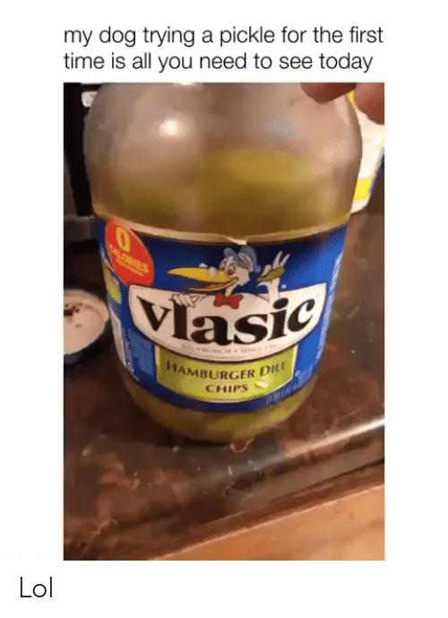 Lol, Time, and Today: my dog trying a pickle for the first  time is all you need to see today  ALORIES  Vlasic  a  M  HAMBURGER DI  CHIPS Lol