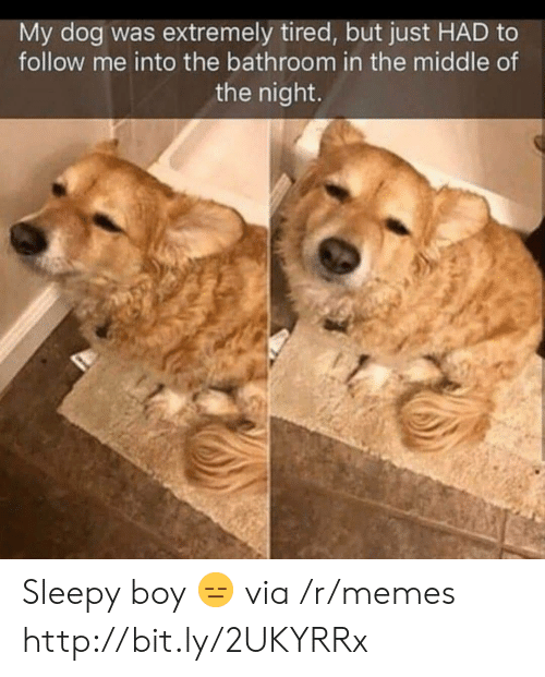 Memes, Http, and The Middle: My dog was extremely tired, but just HAD to  follow me into the bathroom in the middle of  the night. Sleepy boy 😑 via /r/memes http://bit.ly/2UKYRRx