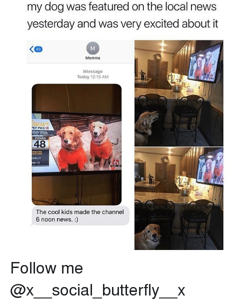 Memes, News, and Butterfly: my dog was featured on the local news  yesterday and was very excited about it  48  Momma  iMessage  Today 12:15 AM  PET PICS 6  48  HILLY  The cool kids made the channel  6 noon news. :) Follow me @x__social_butterfly__x
