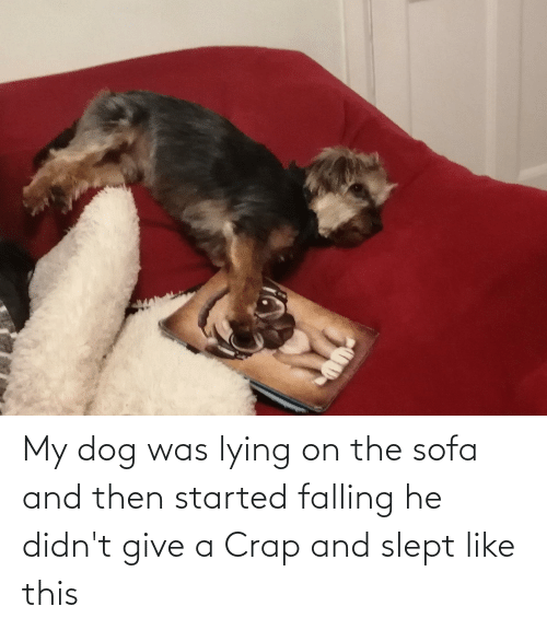 falling: My dog was lying on the sofa and then started falling he didn't give a Crap and slept like this