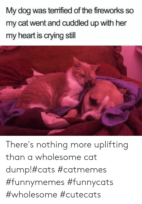 uplifting: My dog was terrified of the fireworks so  my cat went and cuddled up with her  my heart is crying still There's nothing more uplifting than a wholesome cat dump!#cats #catmemes #funnymemes #funnycats #wholesome #cutecats