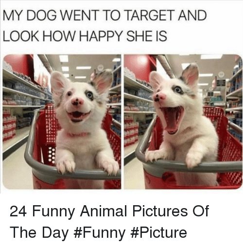 funny picture: MY DOG WENT TO TARGET AND  LOOK HOW HAPPY SHE IS 24 Funny Animal Pictures Of The Day #Funny #Picture