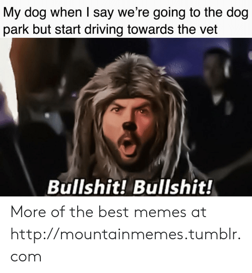 Driving, Memes, and Tumblr: My dog when I say we're going to the dog  park but start driving towards the vet  Bullshit! Bullshit! More of the best memes at http://mountainmemes.tumblr.com
