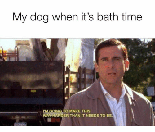 Time, Dog, and Make: My dog when it's bath time  GOING TO MAKE THIS  WAY HARDER THAN IT NEEDS TO BE