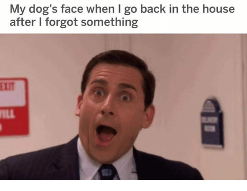Dogs, House, and Humans of Tumblr: My dog's face when I go back in the house  after I forgot something  EXIT