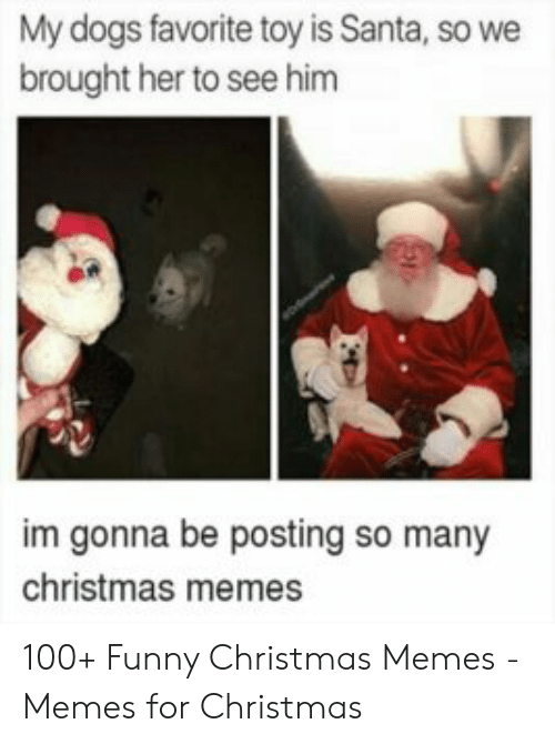 funny christmas memes: My dogs favorite toy is Santa, so we  brought her to see him  im gonna be posting so many  christmas memes 100+ Funny Christmas Memes - Memes for Christmas