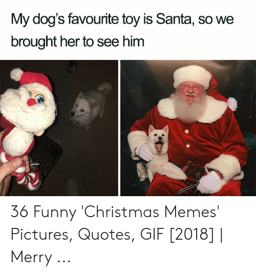 funny christmas memes: My dog's favourite toy is Santa, so we  brought her to see him 36 Funny 'Christmas Memes' Pictures, Quotes, GIF [2018] | Merry ...
