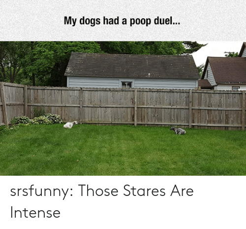 duel: My dogs had a poop duel... srsfunny:  Those Stares Are Intense
