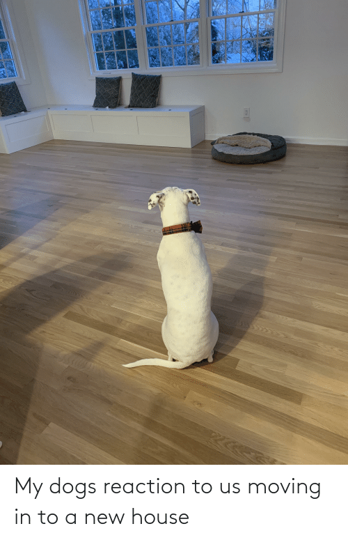 moving in: My dogs reaction to us moving in to a new house