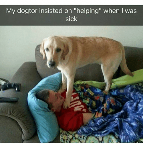 """Memes, Sick, and 🤖: My dogtor insisted on """"helping"""" when I was  sick"""