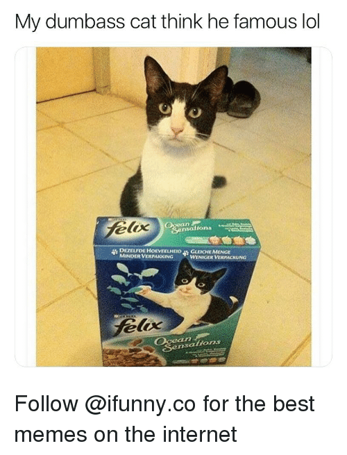 Funny, Internet, and Lol: My dumbass cat think he famous lol  nsations  DEZELFDE HOEVEELHEID  MINDER VERPAKKING  GLEICHE MCNGE  WENIGER VERPACKUNG  loc  r2  Sensattions Follow @ifunny.co for the best memes on the internet