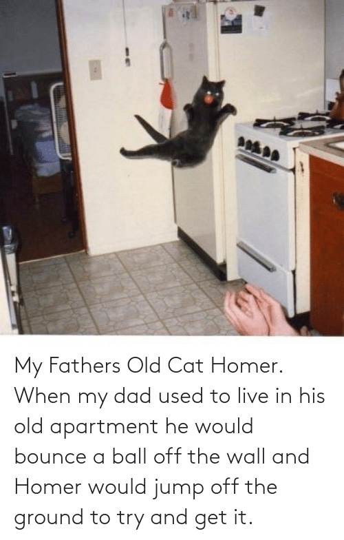 Jump Off: My Fathers Old Cat Homer. When my dad used to live in his old apartment he would bounce a ball off the wall and Homer would jump off the ground to try and get it.