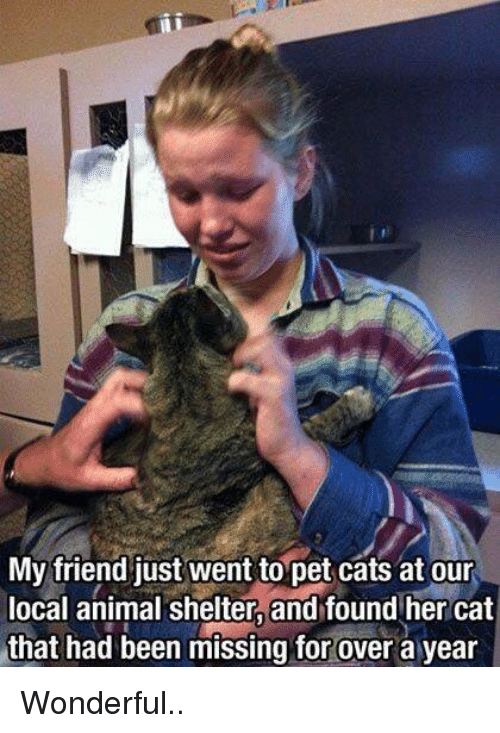 Petting Cat: My friend just went to pet cats at our  local animal shelter, and found her cat  that had been missing for over a year Wonderful..