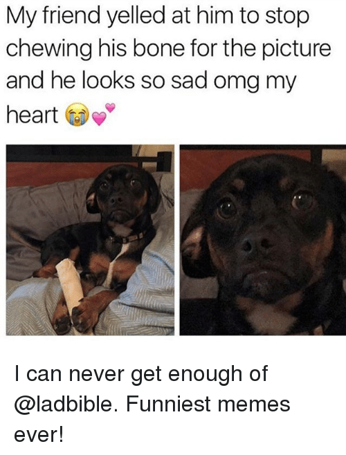Funniest Memes Ever: My friend yelled at him to stop  chewing his bone for the picture  and he looks so sad omg my  heart I can never get enough of @ladbible. Funniest memes ever!