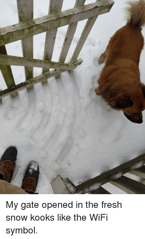 Fresh, Funny, and Snow