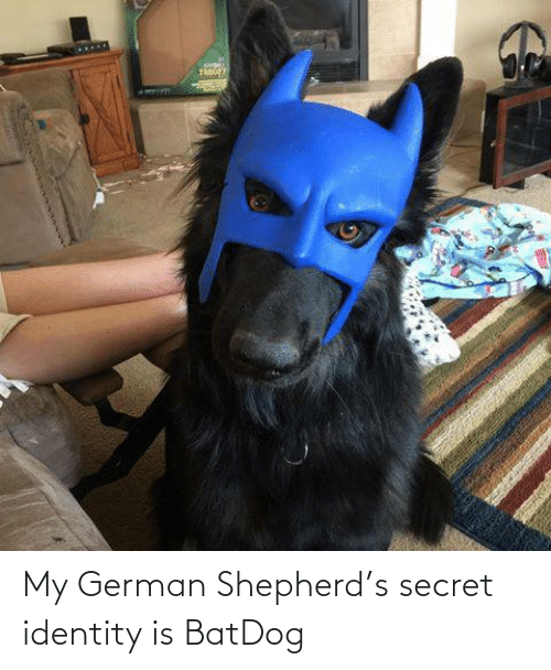identity: My German Shepherd's secret identity is BatDog