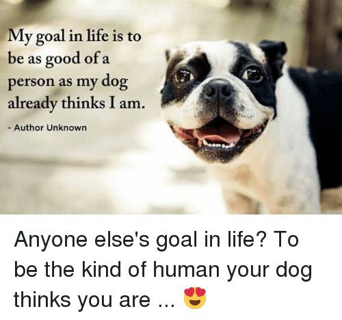 Life, Memes, and Goal: My goal in life is to  be as good of a  person as my dog  already thinks I am  - Author Unknown Anyone else's goal in life? To be the kind of human your dog thinks you are ... 😍