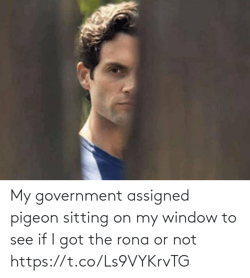 i got: My government assigned pigeon sitting on my window to see if I got the rona or not https://t.co/Ls9VYKrvTG