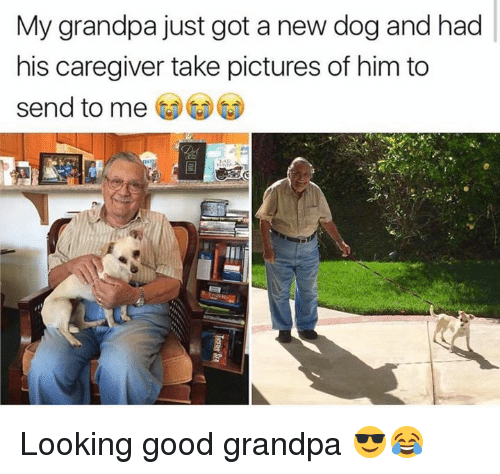 Memes, Grandpa, and 🤖: My grandpa just got a new dog and had  his caregiver take pictures of him to  send to me Looking good grandpa 😎😂