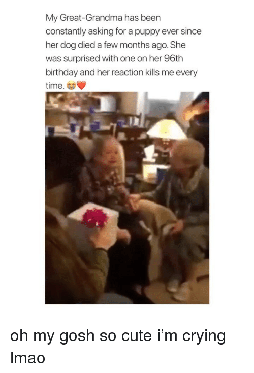 Birthday, Crying, and Cute: My Great-Grandma has been  constantly asking for a puppy ever since  her dog died a few months ago. She  was surprised with one on her 96th  birthday and her reaction kills me every  time. oh my gosh so cute i'm crying lmao