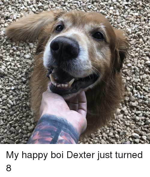 My Happy Boi Dexter Just Turned 8 Dexter Meme On Astrologymemescom
