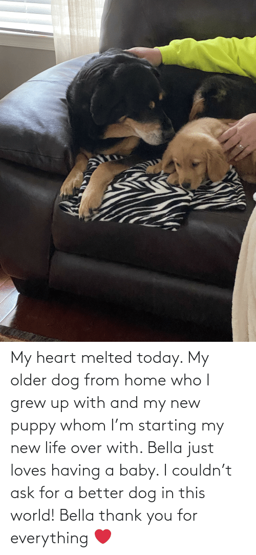 bella: My heart melted today. My older dog from home who I grew up with and my new puppy whom I'm starting my new life over with. Bella just loves having a baby. I couldn't ask for a better dog in this world! Bella thank you for everything ❤️