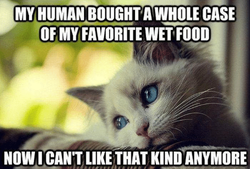 My Human: MY HUMAN BOUGHT AWHOLE CASE  OF MY FAVORITE WET FOOD  NOWICAN'T LIKE THAT KIND ANYMORE