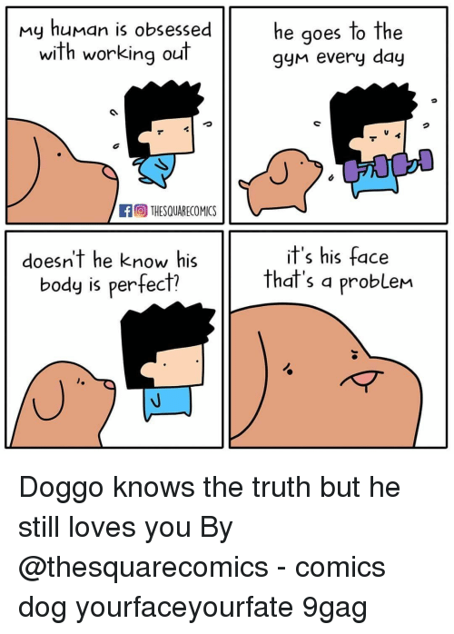 My Human: my human is obsessed  with working out  he qoes to the  gyn every day  fTHESQUARECOMICS  doesn't he know his  body is perfect?  it's his face  that's a probleM Doggo knows the truth but he still loves you⠀ By @thesquarecomics⠀ -⠀ comics dog yourfaceyourfate 9gag