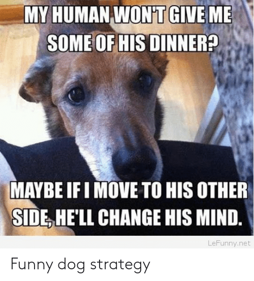 Move To: MY HUMAN WON'T GIVE ME  SOME OF HIS DINNER?  MAYBE IFI MOVE TO HIS OTHER  SIDE HE'LL CHANGE HIS MIND.  LeFunny.net Funny dog strategy