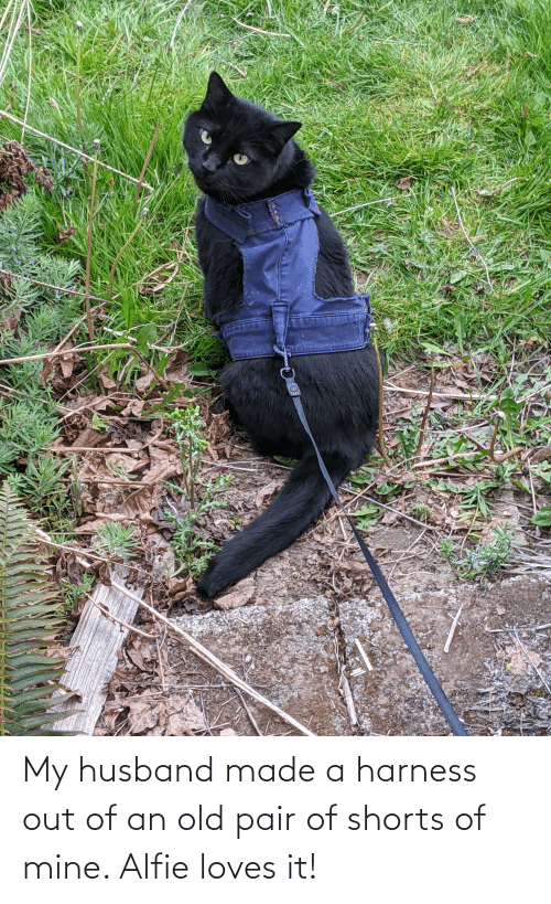 My Husband: My husband made a harness out of an old pair of shorts of mine. Alfie loves it!