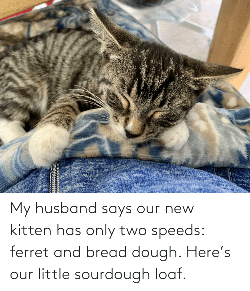 My Husband: My husband says our new kitten has only two speeds: ferret and bread dough. Here's our little sourdough loaf.