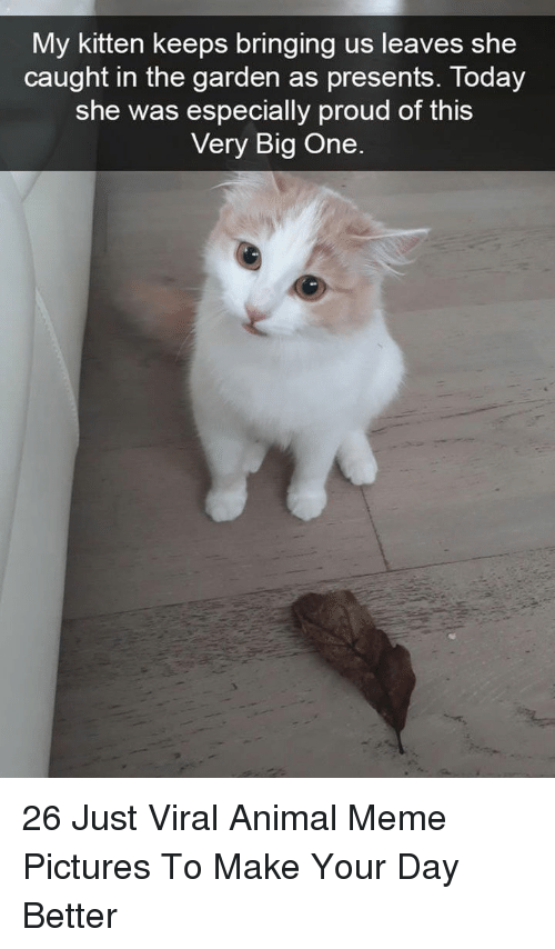 Animal Meme: My kitten keeps bringing us leaves she  caught in the aarden as presents, Today  she was especially proud of this  Very Big One 26 Just Viral Animal Meme Pictures To Make Your Day Better