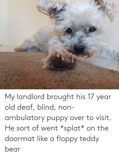Ambulatory: My landlord brought his 17 year old deaf, blind, non-ambulatory puppy over to visit. He sort of went *splat* on the doormat like a floppy teddy bear
