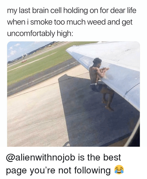 holding-on: my last brain cell holding on for dear life  when i smoke too much weed and get  uncomfortably high: @alienwithnojob is the best page you're not following 😂