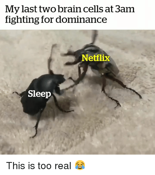 Netflix, Brain, and Sleep: My last two brain cells at 3am  fighting for dominance  Netflix  Sleep This is too real 😂