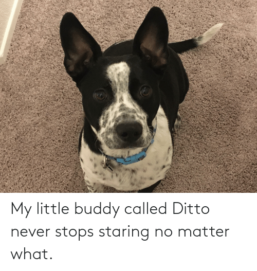 ditto: My little buddy called Ditto never stops staring no matter what.
